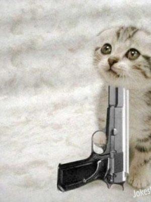 Funny cat suicide