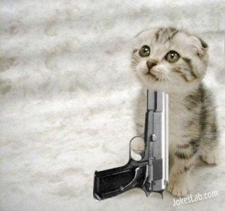 funny-cat-suicide-with-gun