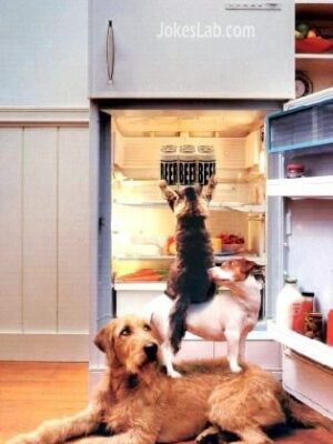 Funny dogs get beers from refrigerator