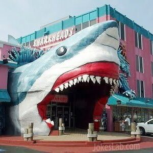 Funny shark building