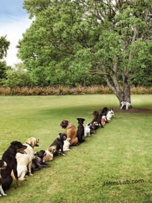 Funny dog queueing  for peeing
