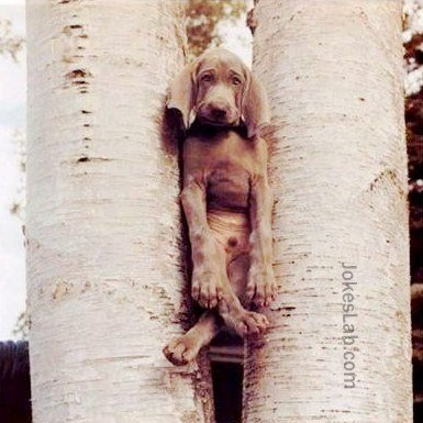 Funny dog trapped in trees