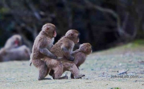 funny-gay-monkeys