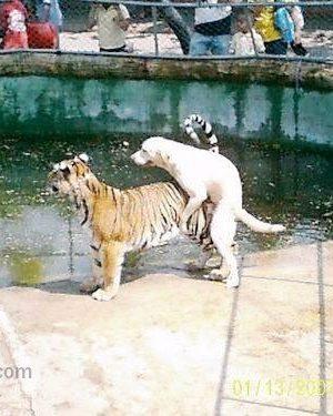 Funny horny dog