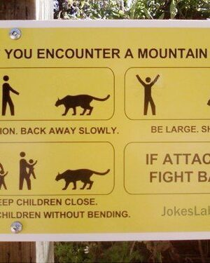 What should you do when encountering a lion?