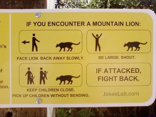 funny-instruction-when-you-encounter-a-mountain-lion