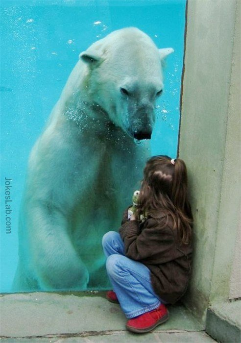 Funny polar bear looking at a little girl