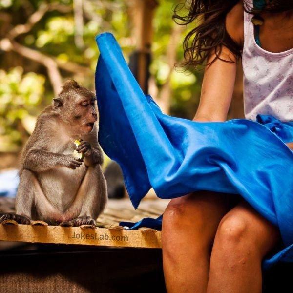 A horny monkey