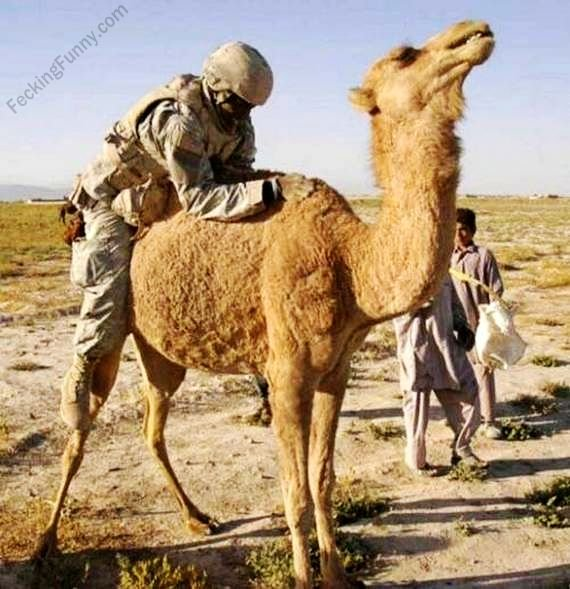 US-solider-in-Iraq-fucking-the-camel