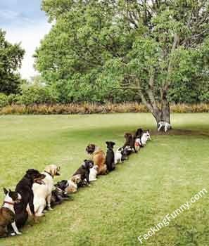 dog-queue-for-pee-on-a-tree