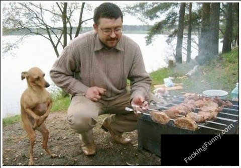 Dog waiting for barbecue