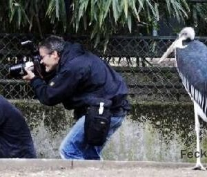 Funny photographer: how to take a good photo