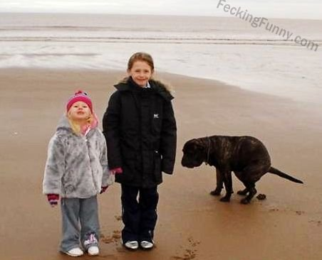 Photobomb, dog pooing