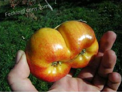 Apple with dual core technology