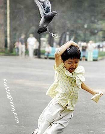 Funny bird attacking a child