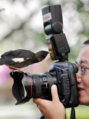 Bird knows photograph better