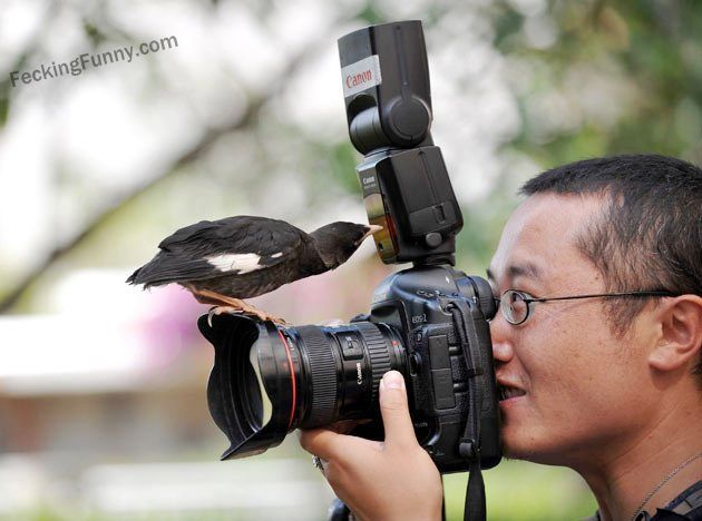 bird-knows-photography-better-than-man