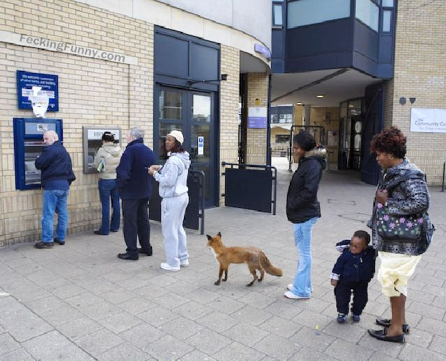 Even dog knows how to queue