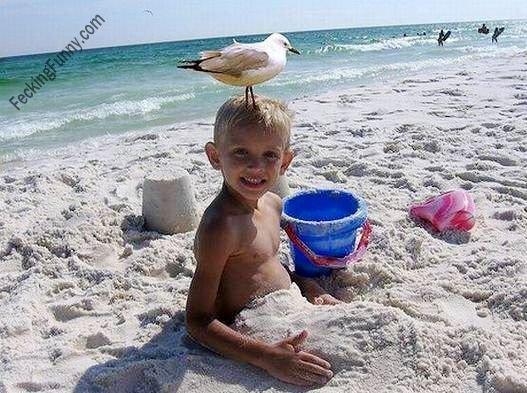 Funny bird touching down on boy's head