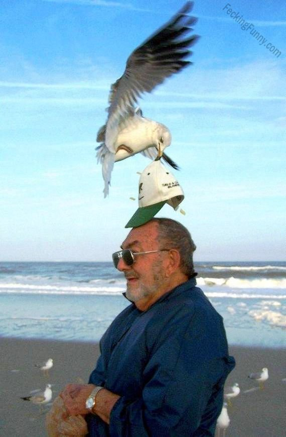 funny-bird-take-cap-in-beach