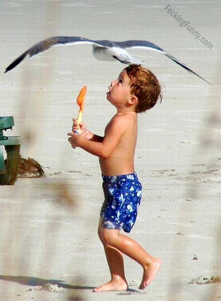 funny-bird-touching-down-boys-head-in-beach