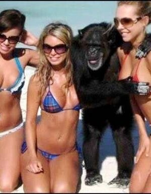 Funny gorilla enjoying woman breasts