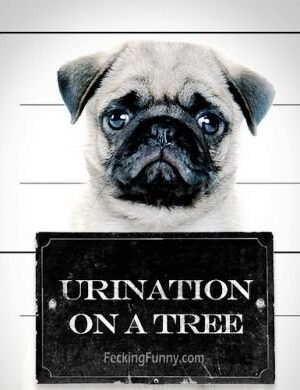 Dog arrested for urination on trees
