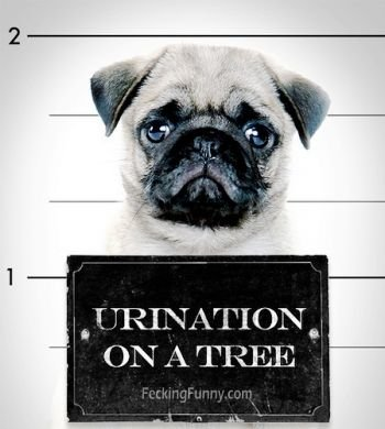 dog-arrested-for-urination-on-tree