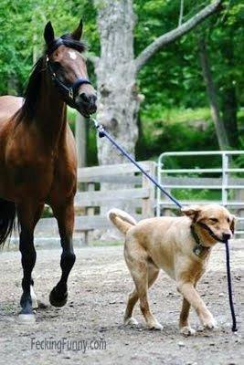Funny horse walk