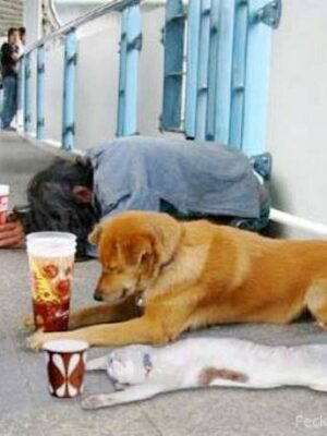 Funny begging dog and cat