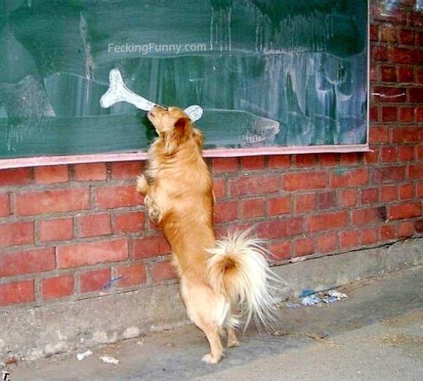 Funny dog and bone on the blackboard