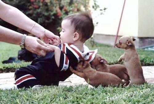 Funny dogs taking care of baby