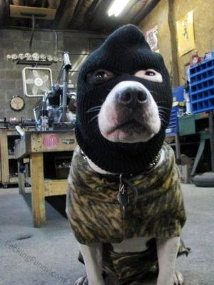 Dog hired by FBI