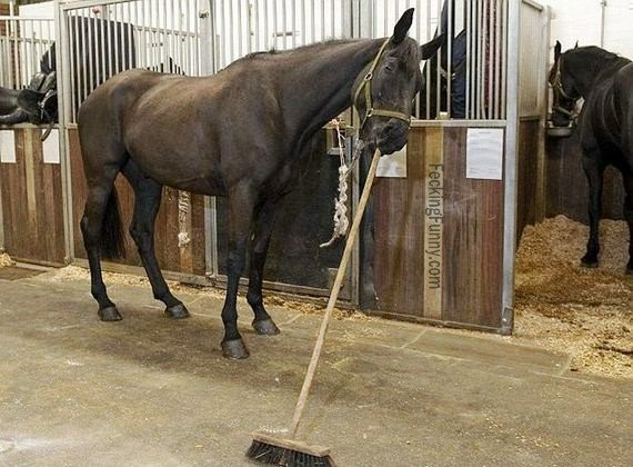 Horse cleaner