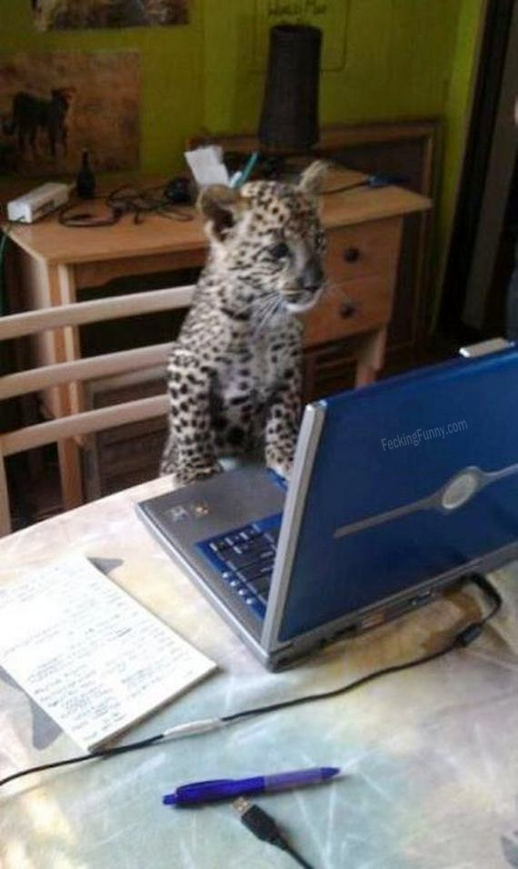 Cat also can use computers!