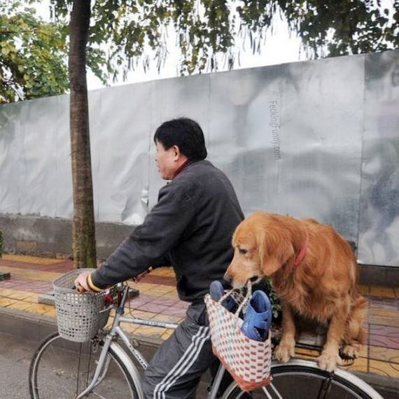 Funny dog carrying the bag