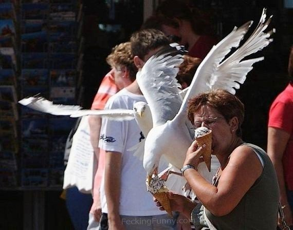 bird-likes-icecream