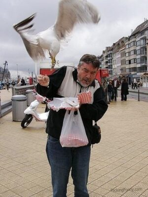 Bird robber