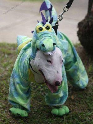 Funny dog clothing