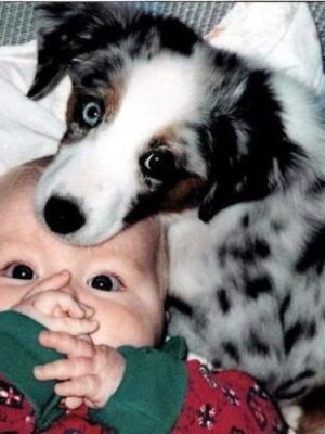Dog likes baby