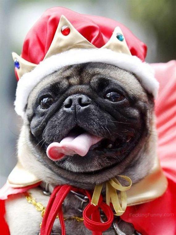 king-dog