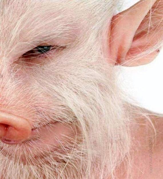 pig-man
