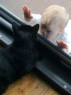 Hide and seek: baby and cat