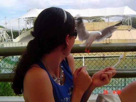 bird-enjoying-fries