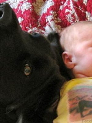 Dog talking with baby