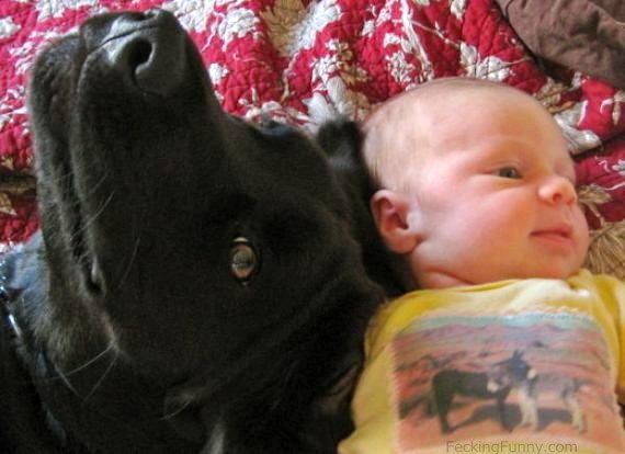 dog-and-baby-talking