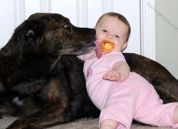 dog-kissing-baby