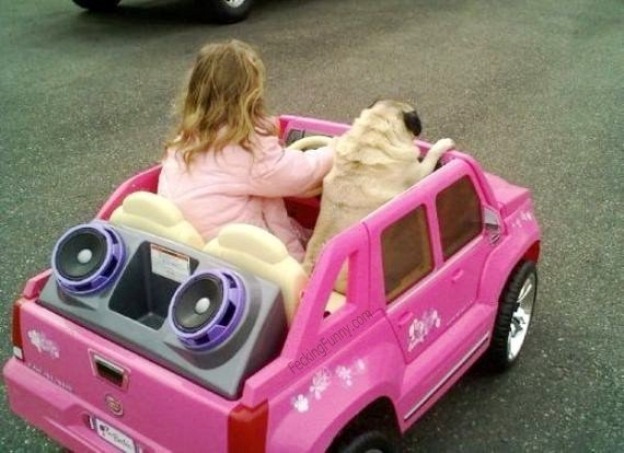 Girl driving with dog
