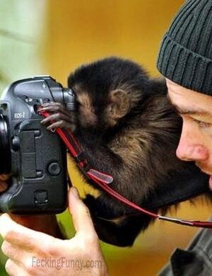 Monkey can also use camera