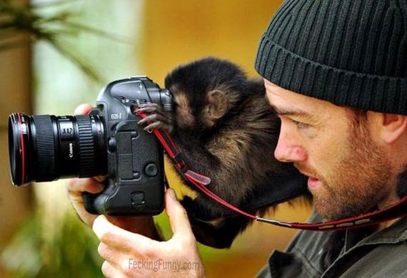 monkey-can-operate-camera